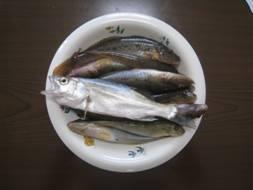 「ハゼの刺身」「SAPPRO CLASSIC」「たきや漁」、そして「八角弁当」