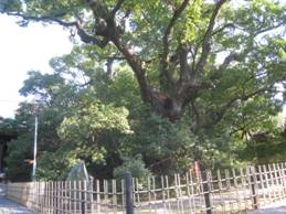 「遠州 信貴山」、「浜松八幡宮」に「初詣」、そして「開運風水」