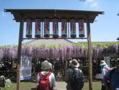 JRさわやかウォーキング「熊野の長藤まつりウォーキング」