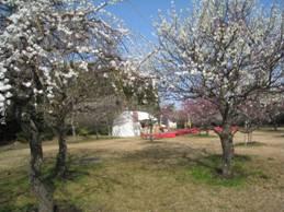 JRさわやかウォーキング「向山緑地公園の「うめまつり」で春の訪れを感じよう」