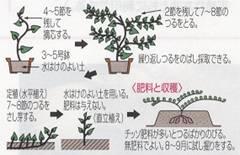 「タケノコ掘り」、「アドベリー」、そして「サツマイモの育て方」