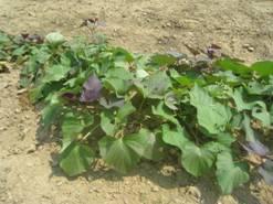 「無農薬海水栽培(佐鳴湖農法)」、そして「そぼろ納豆」