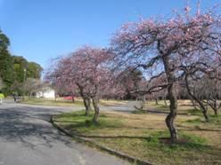 JRさわやかウォーキング「春告げる「うめまつり」と、あったか〜い「豊橋カレーうどん」」