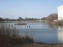 JRさわやかウォーキング「春を告げる「うめまつり」と、あったか〜い「豊橋カレーうどん」」、そして「飛良泉(ひらいずみ)」