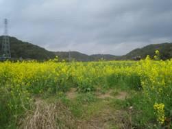 JRさわやかウォーキング「三ケ野七つ道と桶ケ谷沼「菜の花観賞」ウォーク」