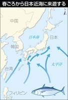「「もちがつお」今年こそ 舞阪漁港」、そして「焼きいなり」